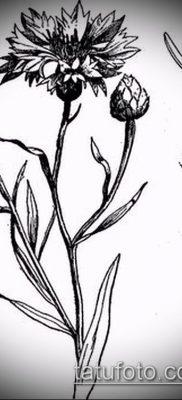фото тату василек (cornflower tattoo) (значение) – пример рисунка – 026 tatufoto.com