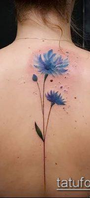 фото тату василек (cornflower tattoo) (значение) – пример рисунка – 030 tatufoto.com