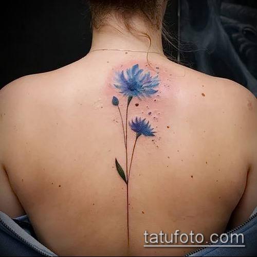 фото тату василек (cornflower tattoo) (значение) - пример рисунка - 030 tatufoto.com