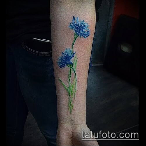 фото тату василек (cornflower tattoo) (значение) - пример рисунка - 037 tatufoto.com