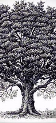 фото тату дуб (tattoo oak) (значение) – пример рисунка – 013 tatufoto.com
