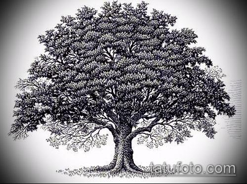 фото тату дуб (tattoo oak) (значение) - пример рисунка - 013 tatufoto.com