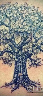 фото тату дуб (tattoo oak) (значение) – пример рисунка – 024 tatufoto.com