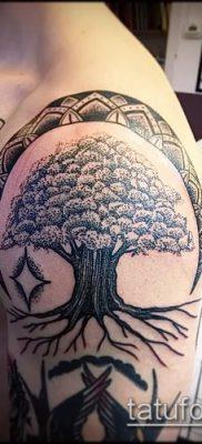 фото тату дуб (tattoo oak) (значение) – пример рисунка – 031 tatufoto.com