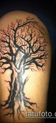 фото тату дуб (tattoo oak) (значение) – пример рисунка – 053 tatufoto.com