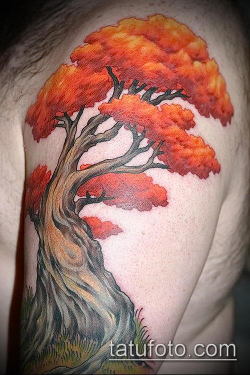 фото тату дуб (tattoo oak) (значение) - пример рисунка - 059 tatufoto.com
