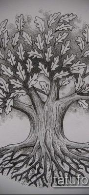 фото тату дуб (tattoo oak) (значение) – пример рисунка – 063 tatufoto.com