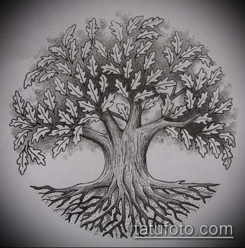фото тату дуб (tattoo oak) (значение) - пример рисунка - 063 tatufoto.com