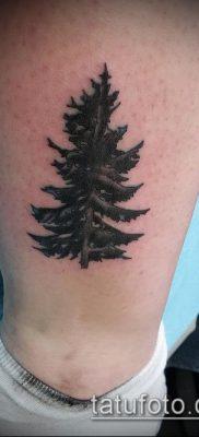 фото тату ель (tattoo spruce) (значение) – пример рисунка – 001 tatufoto.com