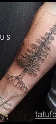 фото тату ель (tattoo spruce) (значение) – пример рисунка – 004 tatufoto.com