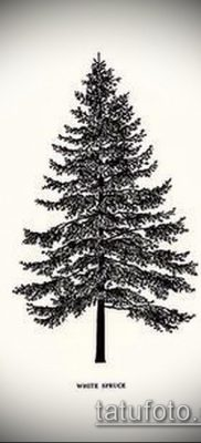 фото тату ель (tattoo spruce) (значение) – пример рисунка – 006 tatufoto.com