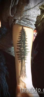 фото тату ель (tattoo spruce) (значение) – пример рисунка – 008 tatufoto.com