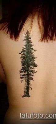фото тату ель (tattoo spruce) (значение) – пример рисунка – 010 tatufoto.com