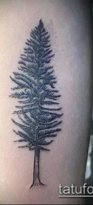 фото тату ель (tattoo spruce) (значение) – пример рисунка – 014 tatufoto.com