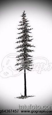 фото тату ель (tattoo spruce) (значение) – пример рисунка – 019 tatufoto.com