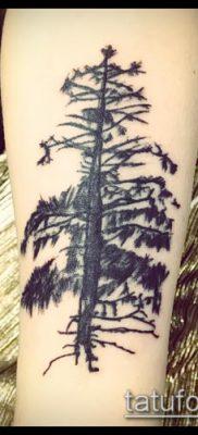 фото тату ель (tattoo spruce) (значение) – пример рисунка – 028 tatufoto.com