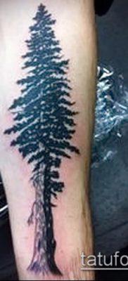 фото тату ель (tattoo spruce) (значение) – пример рисунка – 031 tatufoto.com