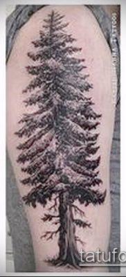 фото тату ель (tattoo spruce) (значение) – пример рисунка – 041 tatufoto.com