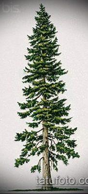 фото тату ель (tattoo spruce) (значение) – пример рисунка – 043 tatufoto.com