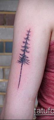 фото тату ель (tattoo spruce) (значение) – пример рисунка – 055 tatufoto.com