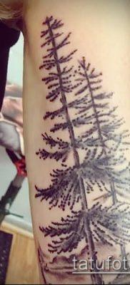 фото тату ель (tattoo spruce) (значение) – пример рисунка – 056 tatufoto.com