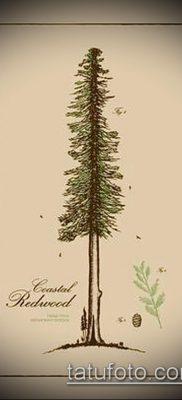 фото тату ель (tattoo spruce) (значение) – пример рисунка – 061 tatufoto.com