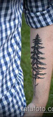 фото тату ель (tattoo spruce) (значение) – пример рисунка – 064 tatufoto.com
