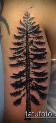 фото тату ель (tattoo spruce) (значение) – пример рисунка – 066 tatufoto.com