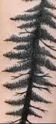 фото тату ель (tattoo spruce) (значение) – пример рисунка – 085 tatufoto.com