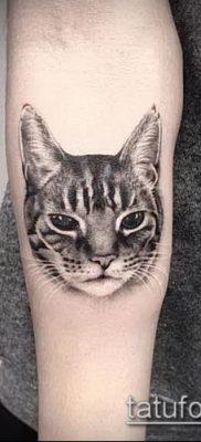 фото тату кот (значение) – пример интересного рисунка тату – 065 tatufoto.com