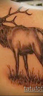 фото тату лось (значение) – пример интересного рисунка тату – 042 tatufoto.com