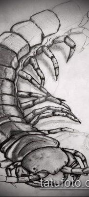 фото тату сороконожка (значение) – пример интересного рисунка тату – 011 tatufoto.com