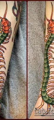 фото тату сороконожка (значение) – пример интересного рисунка тату – 017 tatufoto.com