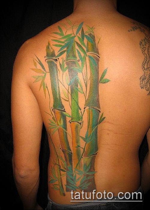 ТАТУИРОВКА БАМБУК №898 - эксклюзивный вариант рисунка, который успешно можно использовать для переработки и нанесения как татуировка бамбук