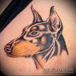 тату доберман №548 - интересный вариант рисунка, который хорошо можно использовать для переделки и нанесения как тату доберман на ноге