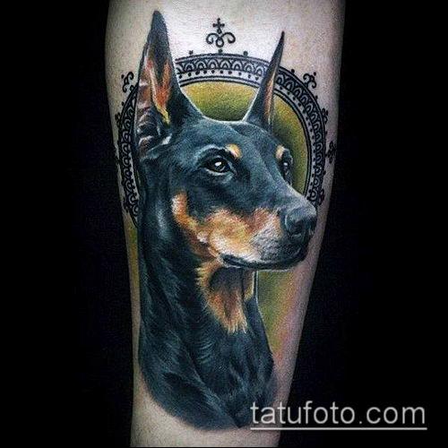 тату доберман №761 - интересный вариант рисунка, который хорошо можно использовать для переработки и нанесения как тату доберман с короной