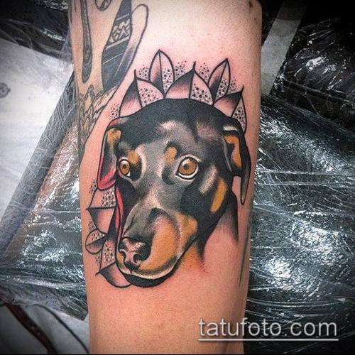 тату доберман №116 - эксклюзивный вариант рисунка, который успешно можно использовать для переработки и нанесения как тату добермана на икре