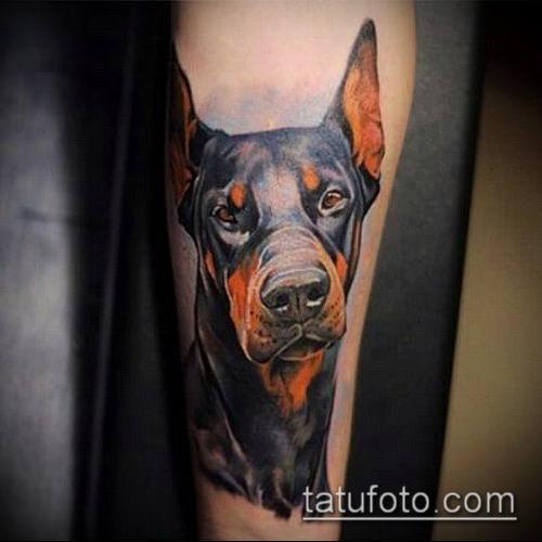 тату доберман №537 - интересный вариант рисунка, который удачно можно использовать для преобразования и нанесения как тату доберман щенок