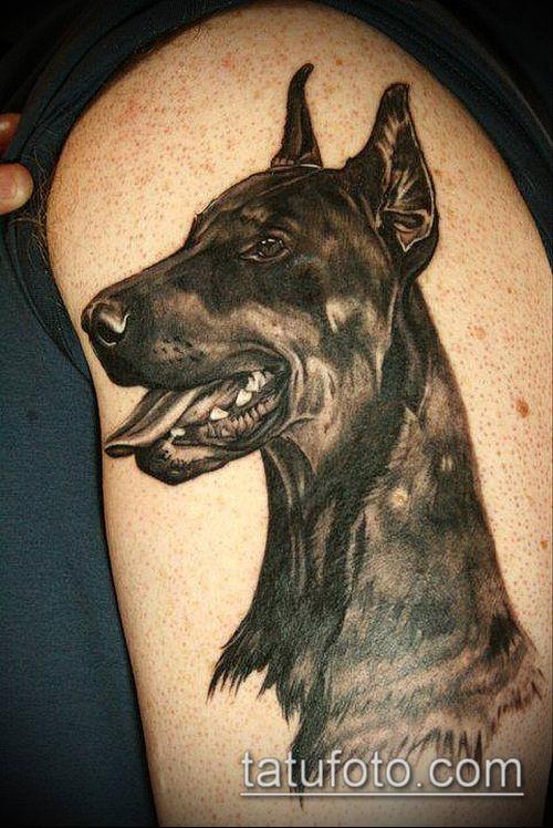 тату доберман №238 - достойный вариант рисунка, который успешно можно использовать для переделки и нанесения как тату доберман оскал