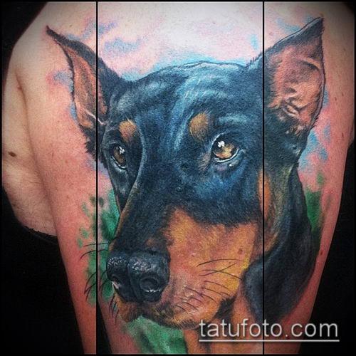 тату доберман №572 - эксклюзивный вариант рисунка, который успешно можно использовать для переделки и нанесения как тату доберман на плече