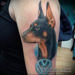тату доберман №11 - крутой вариант рисунка, который легко можно использовать для переработки и нанесения как тату доберман щенок