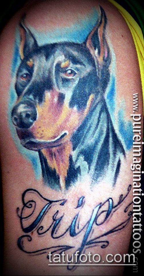 тату доберман №281 - классный вариант рисунка, который удачно можно использовать для переделки и нанесения как тату доберман в смокинге