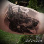 тату доберман №229 - интересный вариант рисунка, который хорошо можно использовать для переделки и нанесения как тату доберман графика
