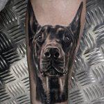 тату доберман №237 - достойный вариант рисунка, который удачно можно использовать для переработки и нанесения как тату доберман на руке