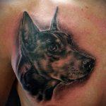 тату доберман №104 - уникальный вариант рисунка, который успешно можно использовать для переделки и нанесения как tattoo doberman