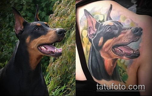 тату доберман №521 - достойный вариант рисунка, который хорошо можно использовать для переделки и нанесения как татуировка доберман