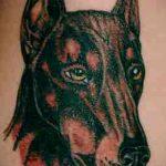 тату доберман №35 - интересный вариант рисунка, который успешно можно использовать для преобразования и нанесения как тату доберман на плече