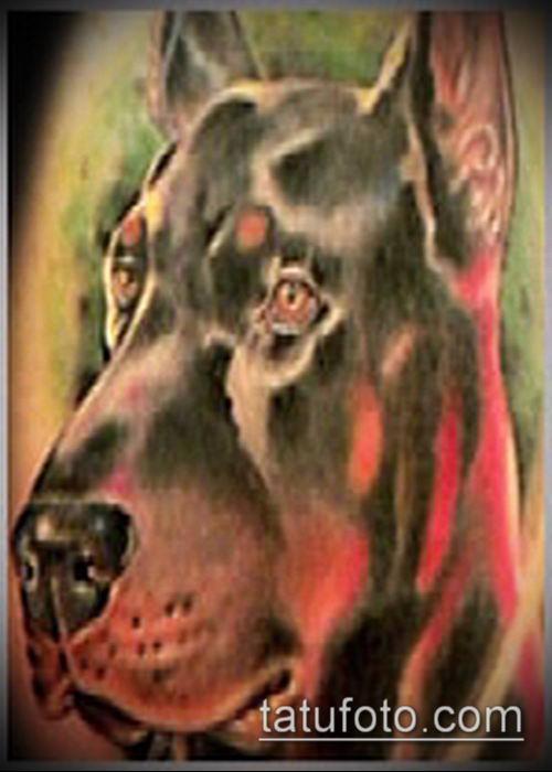 тату доберман №133 - прикольный вариант рисунка, который хорошо можно использовать для переделки и нанесения как тату добермана на икре