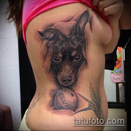 тату доберман №880 - достойный вариант рисунка, который успешно можно использовать для переделки и нанесения как тату доберман в смокинге