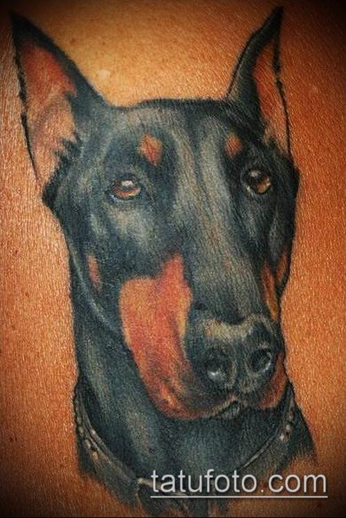 тату доберман №121 - интересный вариант рисунка, который успешно можно использовать для доработки и нанесения как тату доберман в смокинге